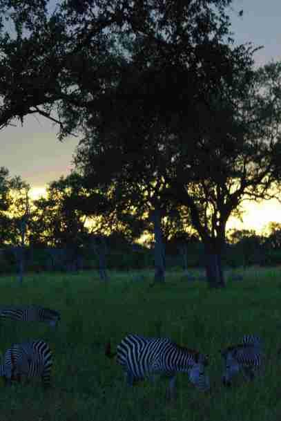 Safari Sonnenuntergang